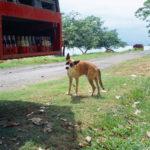 Animal_1288095155_01