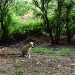 Animal_1288095753_07