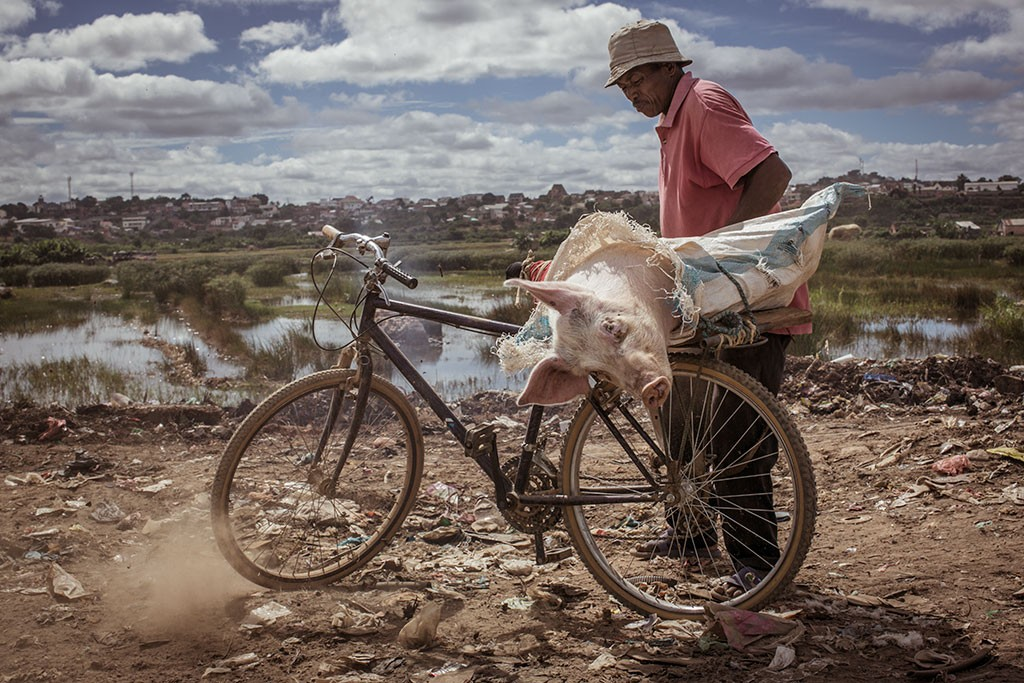 Live pig on bike - La-Digue Madagascar GOLD show 2014